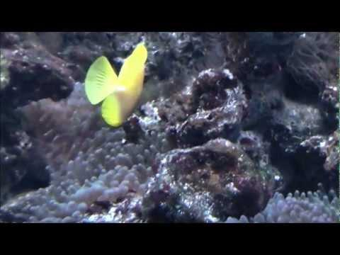 ENGELS Productions - Visite de l' Aquarium de Wasserbillig - Full-HD