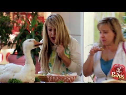 Just for Laughs TV - GOOSE ATTACK IN SUPERMARKET OMG LOL!!
