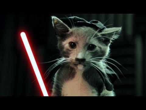 Jedi Kittens - Jedi Kittens Strike Back