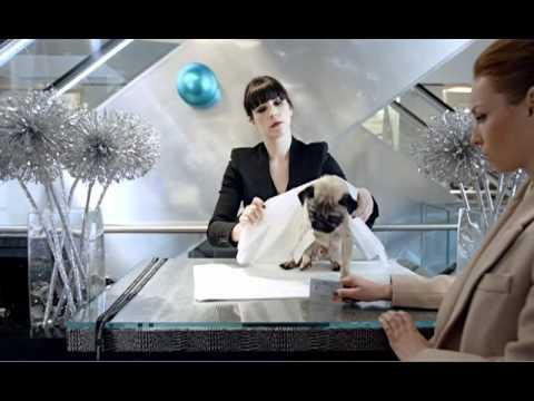 A Dog is for Life - A Harvey Nichols Christmas - the fashionista's must have accessory