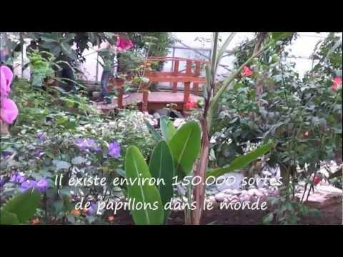 ENGELS Productions - Visite du Jardin des Papillons - Full HD