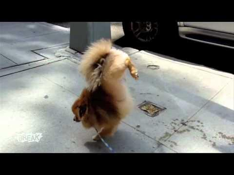 Dog Pees Weird - This dog redefines Doggy Style