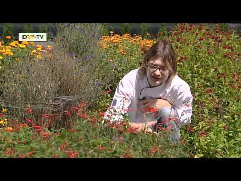 à la carte - carpaccio of venison and a salad of wild herbs | euromaxx