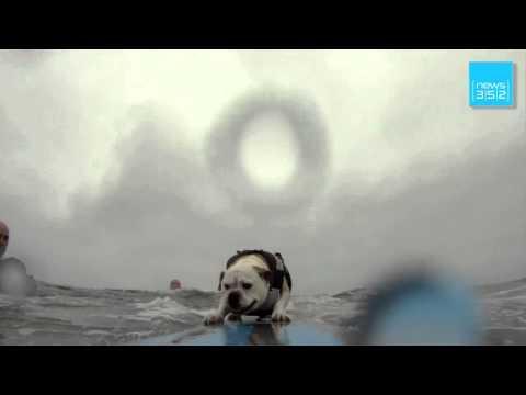 Huntington Beach - Surfende Hunde: Tierisch gut auf der Welle