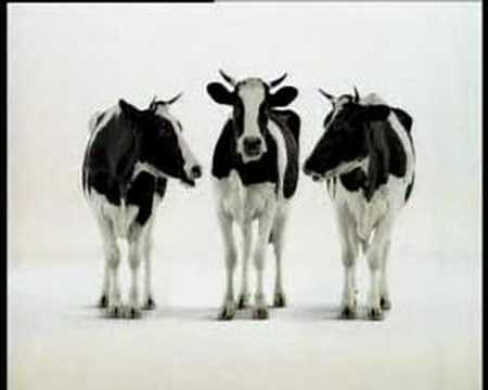 Swiss milk - Swiss milk