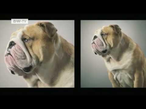 Tim Flach - Der Londoner Tierfotograf Tim Flach | euromaxx