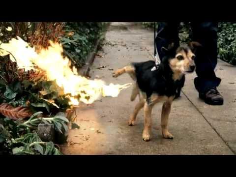 Fire Dog - Beau petit chien qui pisse du feu